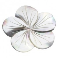 "LOGIN TO VIEW PRICINGFlowerBlack LipMother of Pearl45mm(1 3/4"") - Product Image"